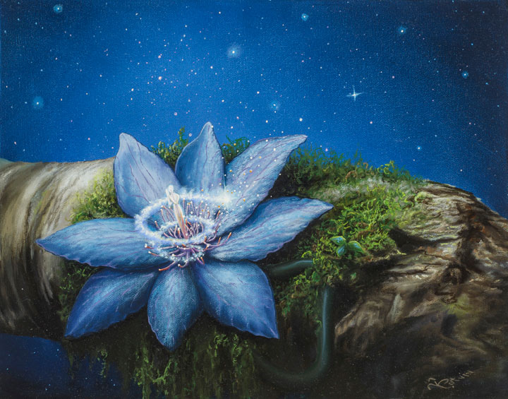 CELESTIAL FLOWER 11×14