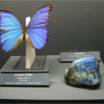 A fascinating duet, two wonders: MINERALS and INSECTS